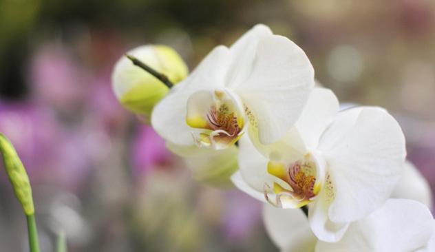 blomstercafeen_004.JPG