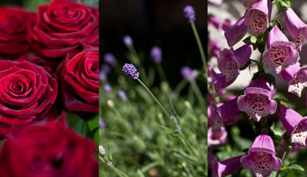 blomster_20caffen_002.JPG