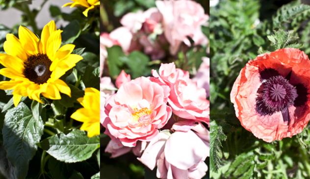blomster_20caffen_003.JPG