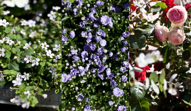 blomster_20caffen_004.JPG