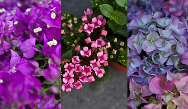 blomster_20caffen_006.JPG