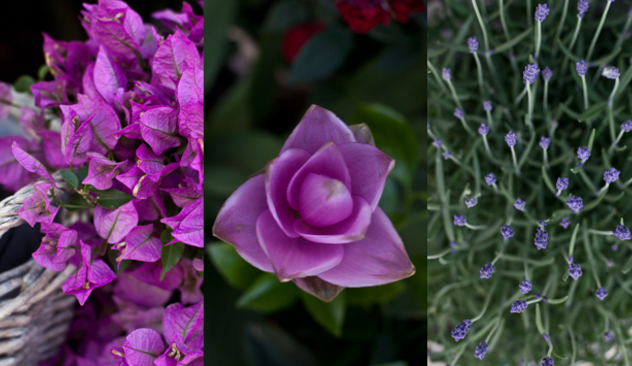 blomster_20caffen_007.JPG