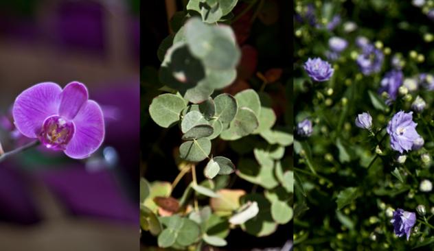 blomster_20caffen_010.JPG